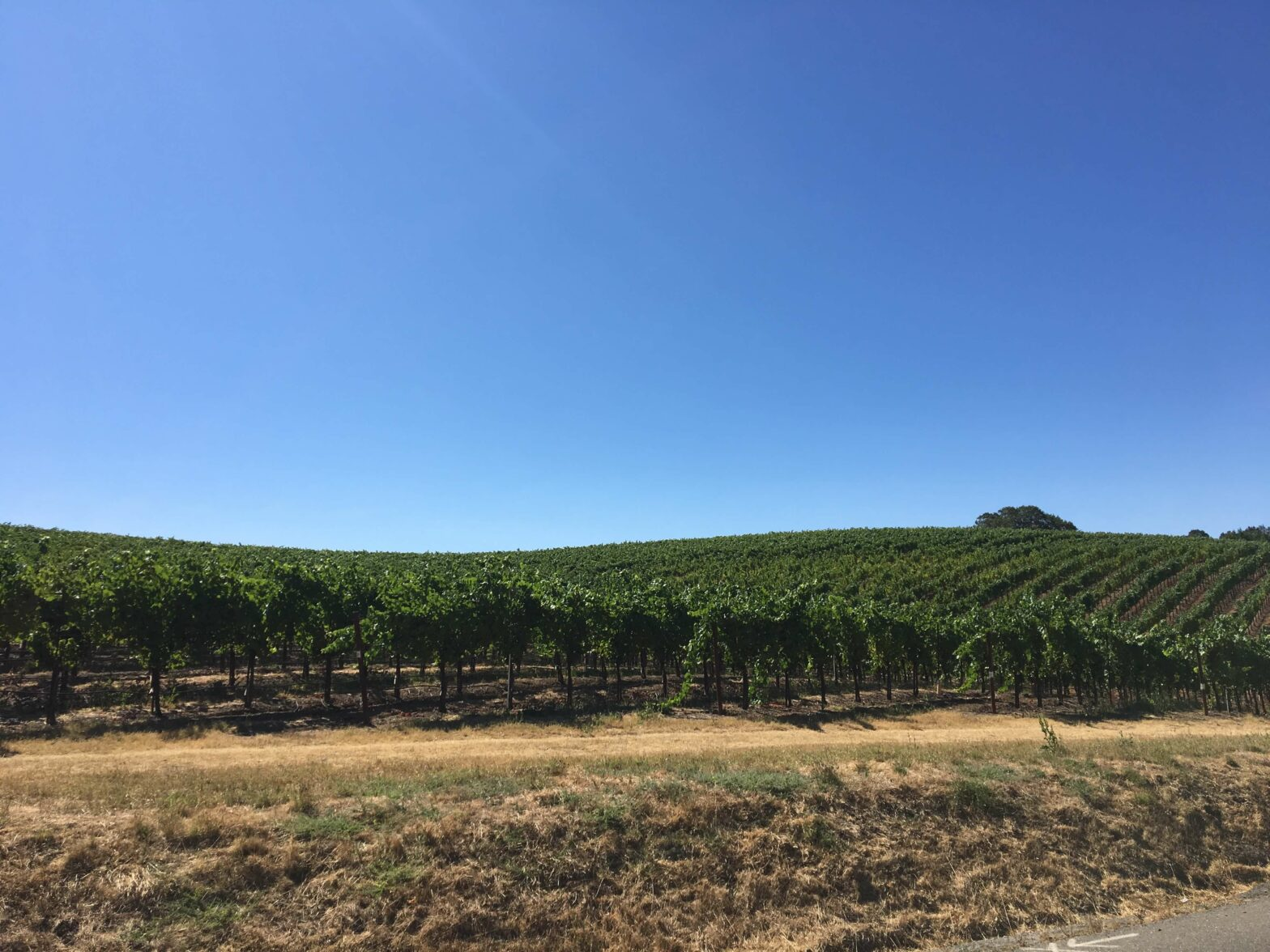 View of vineyards in Sonoma